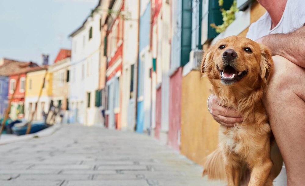 Smily dog