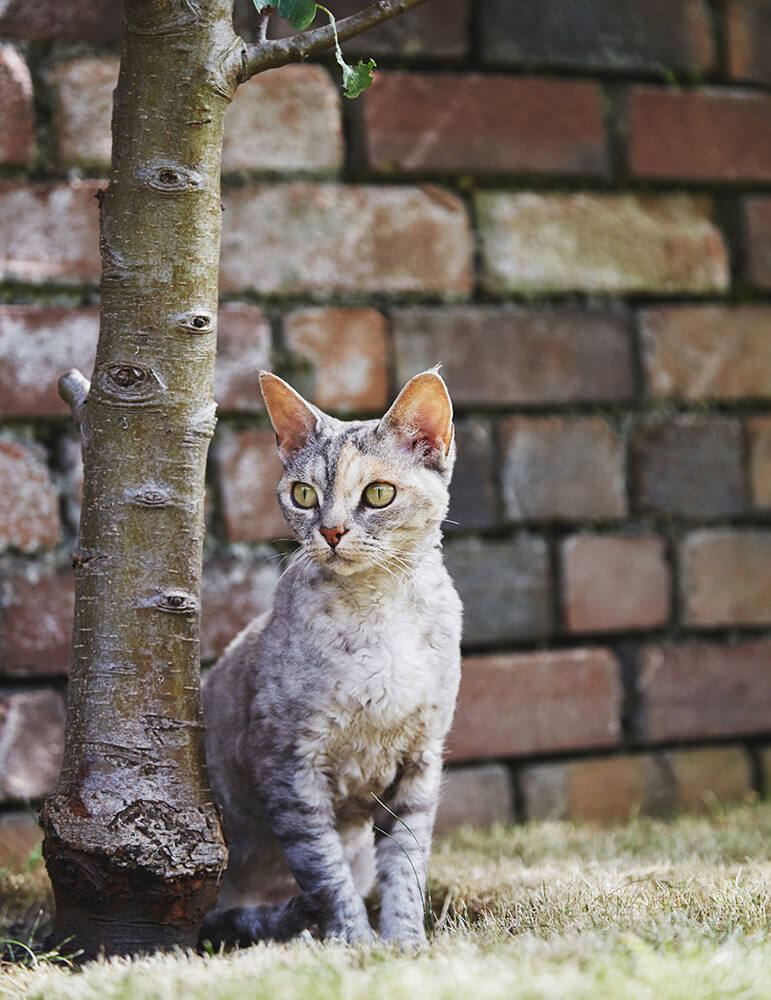 Rustic wall and cat